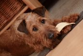 Du bio pour votre chien, atout santé ?